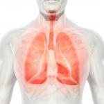 Auf dem Weg zur künstlichen Lunge