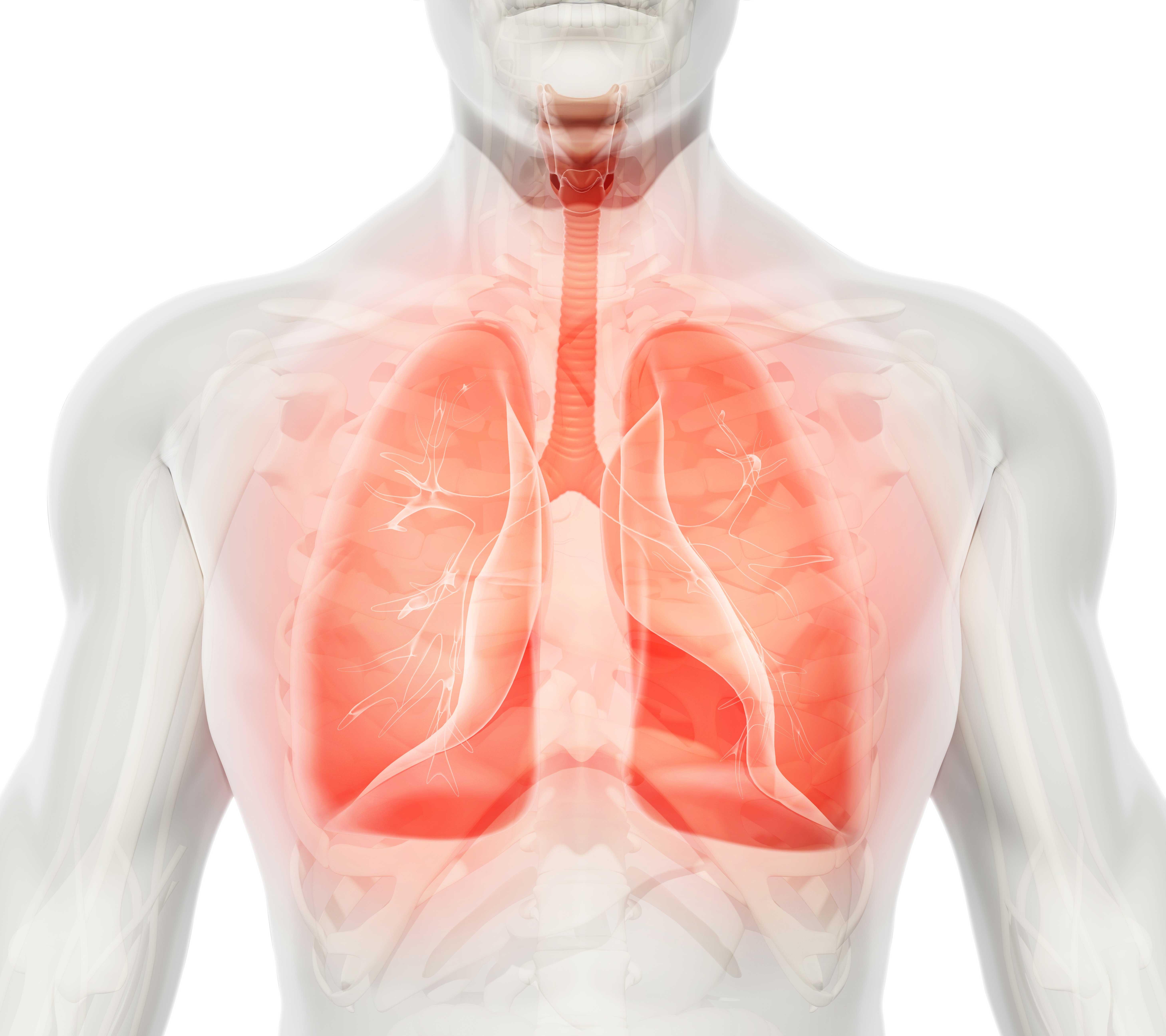 Auf Dem Weg Zur Knstlichen Lunge Ac Forscht