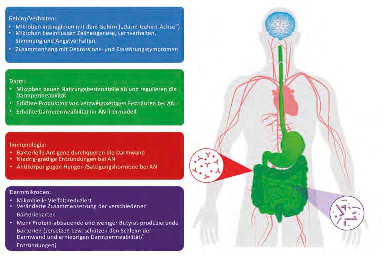 Die Rolle des Darmmikrobioms bei Anorexia nervosa.