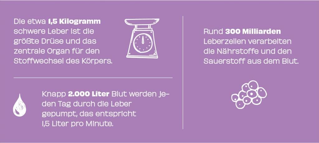 Zahlen Daten_Leber