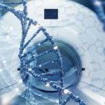 """Studie in """"Nature Cancer"""" publiziert:  Bildbasierte Erkennung genetischer Veränderungen von Tumoren mittels künstlicher Intelligenz"""