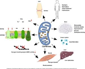 Klinische und molekulare Veränderungen in Patienten mit C2orf69-Verlust